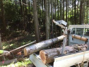 間伐の現場604